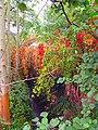 Plante de parc à Kraainem Belgique.jpg