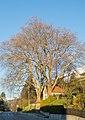 Platanenbäume bei Kapelle.jpg