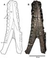 Plesiosuchus manselii.png