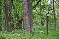 Podmolí-první-zóna-NP-nad-Šobesem2019b.jpg