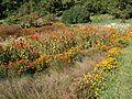 Poltava Botanical garden (79).jpg