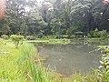 Pond View 20170706 160153 001.jpg