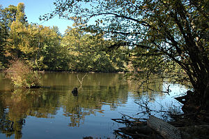 Little River (Red River tributary) - The lower course of the Little River features swamps, Bald Cypress forests, and American alligators at the northwestern limit of their range.