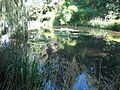 Pond in Hofgarten (Innsbruck).jpg