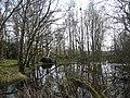 Pond near Trenewydd - geograph.org.uk - 486500.jpg
