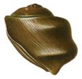 Potamolithus rushii shell 3.png