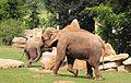 Prague Zoo - elephants.jpg