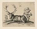 Print, Stag, 1649 (CH 18096997).jpg