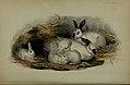 Proceedings of the Zoological Society of London (Mammalia Plate LVI) (6140336620).jpg