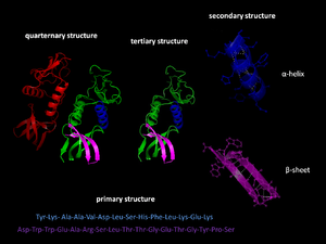 Protein folding - Results of protein folding.