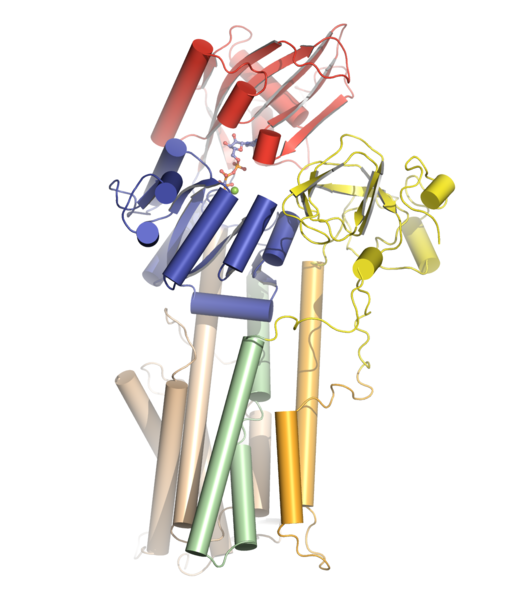 Proton ATPase cartoon overview