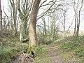 Public footpath through Coed yr Hendy - geograph.org.uk - 373136.jpg