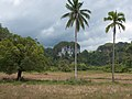 Puerto Princesa Subterranean Park, limestone rock formations and tropical palm trees, Palawan, Philippines.jpg