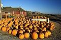 Pumpkins - panoramio.jpg