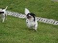 Puppy - panoramio (1).jpg