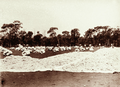 Queensland State Archives 2184 Wool drying ground at Woolerina Station 1897.png