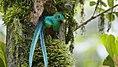 Quetzalbiotopo.jpg