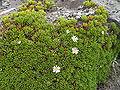 Quito Lichen neartheChimborazo1.JPG