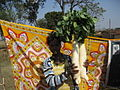 Radishes from Banapiri village 1 - Jharkhand state of India.JPG
