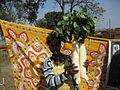 Radishes from Banapiri village 1 - Jharkhand state of India.JPG