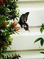 Random Butterfly.jpg