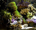 Reef.03.080106.jpg