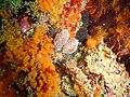 Reef life on Kalk Bay harbour wall P3253829.JPG