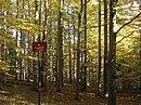Rezerwat Jaworzyna nature reserve Poland.jpg
