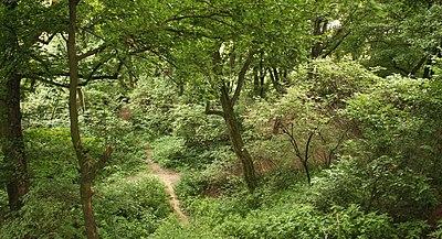 Rezerwat lisia gora - rzeszow IIp