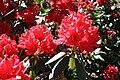 Rhododendronpark Bremen 20090513 234.JPG