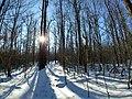 Ricketts Glen State Park winter hike 14 (43427955820).jpg