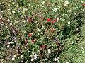 Rock-cornwall-england-tobefree-20150715-153542.jpg