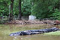 Roman Forest Flood, 4-19-16 at 2-30 PM (26463130711).jpg