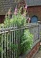 Rosebay Willowherb - geograph.org.uk - 527778.jpg