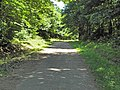 Route forestière du Faîte (Forêt de Montmorency) - panoramio.jpg