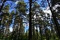 Rovaniemi, Finland (13) (36547155501).jpg
