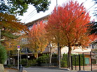 Row of trident maple trees in Kori housing complex 20071123
