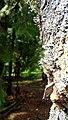 Rumanian Forest, Carpatos Mountains 40.jpg