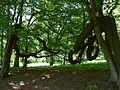 Rzucewo. Park z XIX wieku..jpg