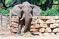 Safari 210616 Elephant 01.jpg