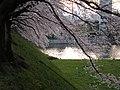 Sakura - panoramio.jpg