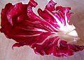 Salad-leaf.jpg