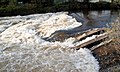 Salmon leap in flood.jpg