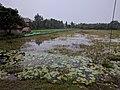 Satjelia Island Village in Sunderbans (24455875308).jpg