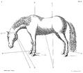 Saunier - La Parfaite Connaissance des chevaux 193.png