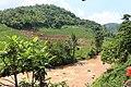 Sawah di kaki bukit (belakang SPBU) - panoramio.jpg