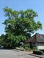 Schleswig-Holstein, Wrist, Naturdenkmal NIK 7723.JPG