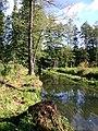 Schwarzerlenwald bei Neu Zauche.jpg