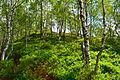 Scotland Highlands (18610431043).jpg