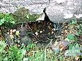 Secret spring at Llanllawer - geograph.org.uk - 458232.jpg
